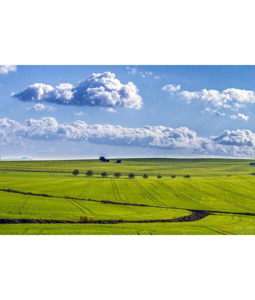 paisajes-algodonales-cadiz