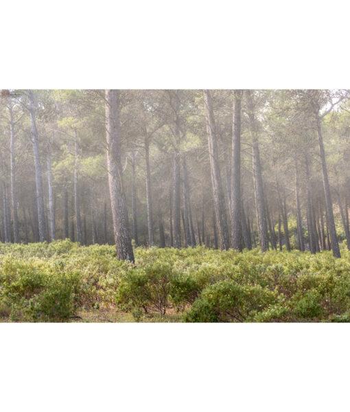 sierra-tejeda-bosque